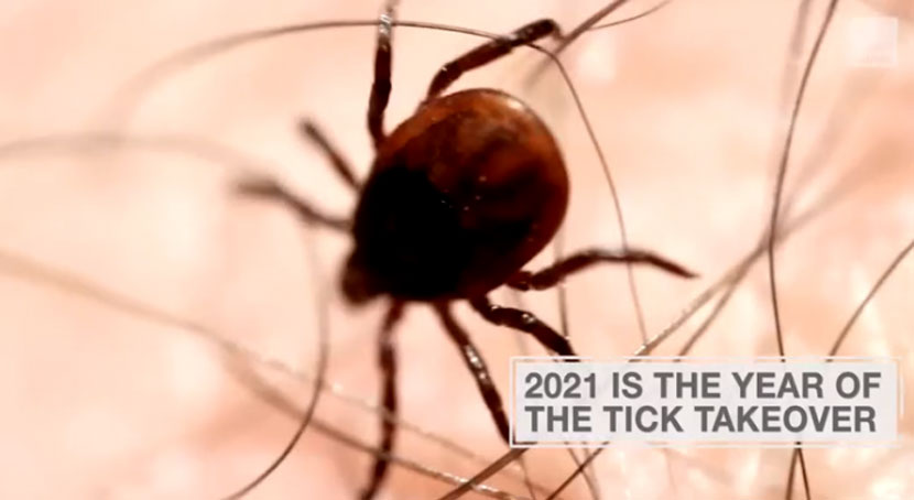 The number of ticks is likely to soar in most parts of the United States